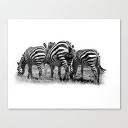 Three Zebras Canvas Print