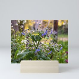 Purple Flowering Borage in Sunlit Gardens Mini Art Print