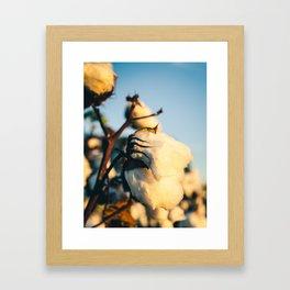 Cotton Field 13 Framed Art Print