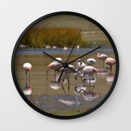 Chilean Flamingo (Phoenicopterus chilensis) Wall Clock