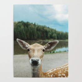Fawn in nature looking in camera Poster
