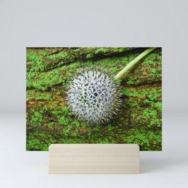 Globe Thistle. Mini Art Print