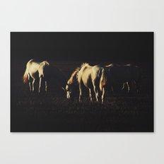 Horses Canvas Print