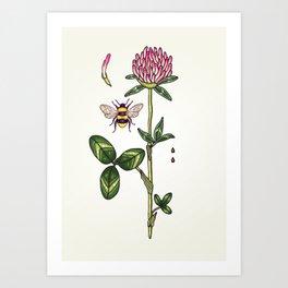 aromatic red clover Art Print
