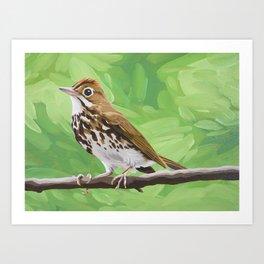 Ovenbird Art Print