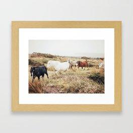 All the Horses Framed Art Print