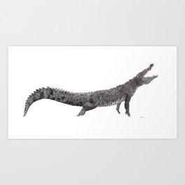 American Crocodile Art Print