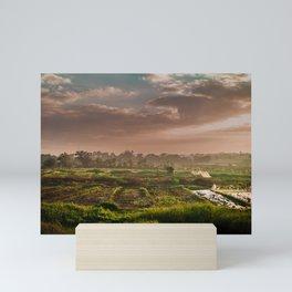 Rice fields Mini Art Print