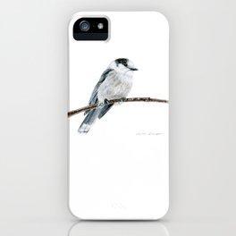 Gray Jay by Teresa Thompson iPhone Case