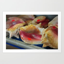 Conch shells with stickers Art Print