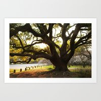 Sunset in the Palace Gardens Art Print
