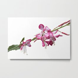 flower in bloom in the garden in spring Metal Print