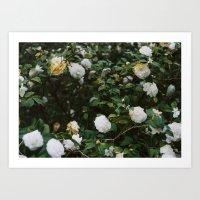 winter bloom Art Print