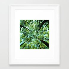 Looking up in Woods Framed Art Print