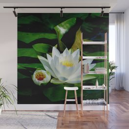 White Water Lily and Bud in Pond Wall Mural