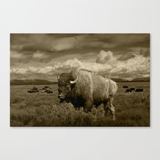American Buffalo Bison in the Grand Teton National Park in Sepia Tone Canvas Print