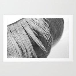 BW silk horse mane Art Print