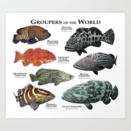 Groupers of the World Art Print