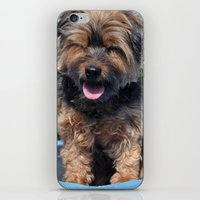 yorkie iPhone & iPod Skins featuring Yorkie by Sammycrafts