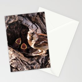 House Sparrow Keeping House Stationery Cards