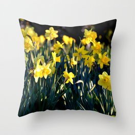 LOVELY DAFFODILS IN THE LATE SPRING AFTERNOON LIGHT Throw Pillow