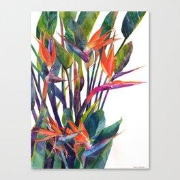 The bird of paradise Canvas Print