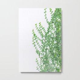 Green creepers climbing the wall Metal Print