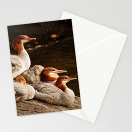 Common Merganser Family Stationery Cards