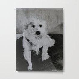 Sweet dog needing a brushing Metal Print