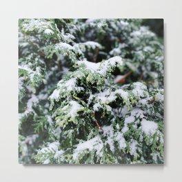 Evergreen • Snow it Begins Metal Print