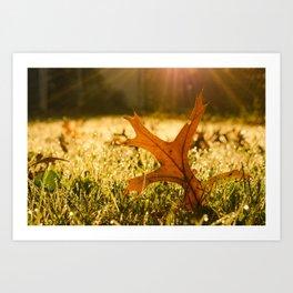 Fall Leaf in Morning Golden Sun Rays - Autumn Botanical Nature Photo Art Print