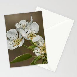 pear flower on tree Stationery Cards