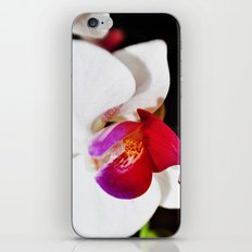 White and Purple Orchid iPhone & iPod Skin