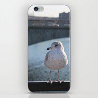 charlie iPhone & iPod Skins featuring Charlie by Chris Cooch