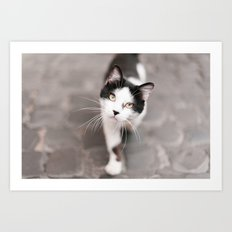 Friendly Black and White Cat Art Print