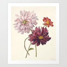 Dahila's - Botanical Illustration Art Print