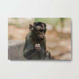 Monkeying Around Metal Print