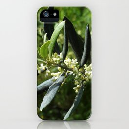 The Olive Blooms in May iPhone Case