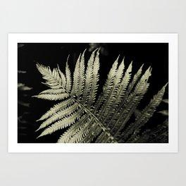 Silver Toned Ferns Glow In A Cedar Forest Art Print
