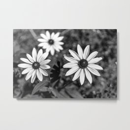 Three Gloriosa daisies B&W Metal Print