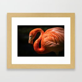 Flamingo photo Framed Art Print
