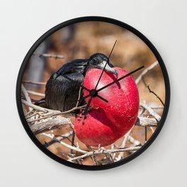 Frigatebird bird of Galapagos Wall Clock