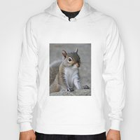squirrel Hoodies featuring Squirrel by Charlene McCoy