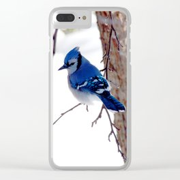 Blue Jay in winter 2 Clear iPhone Case