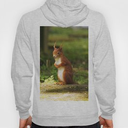 A red squirrel  Hoody