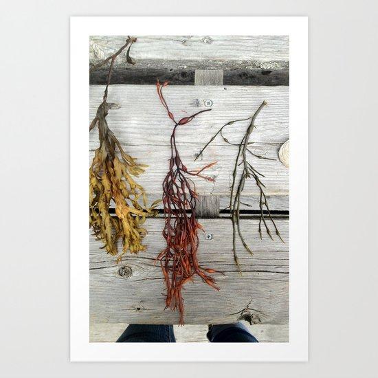 Deer Isle Seaweed  Art Print