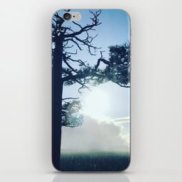 Oregon tree iPhone Skin