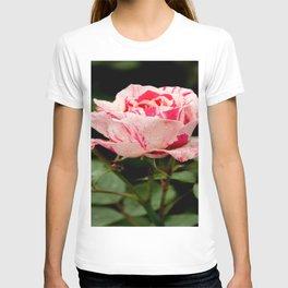 Sentimental Rose T-shirt