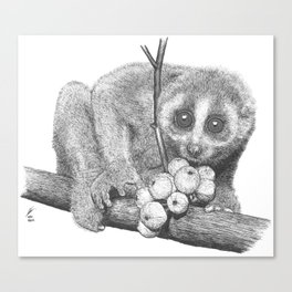 Slow Loris (Kera Duku) Canvas Print