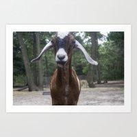 Goat! Art Print